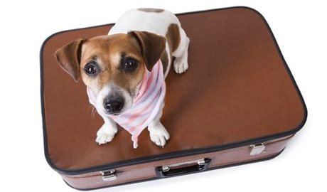 Moving overseas with pets